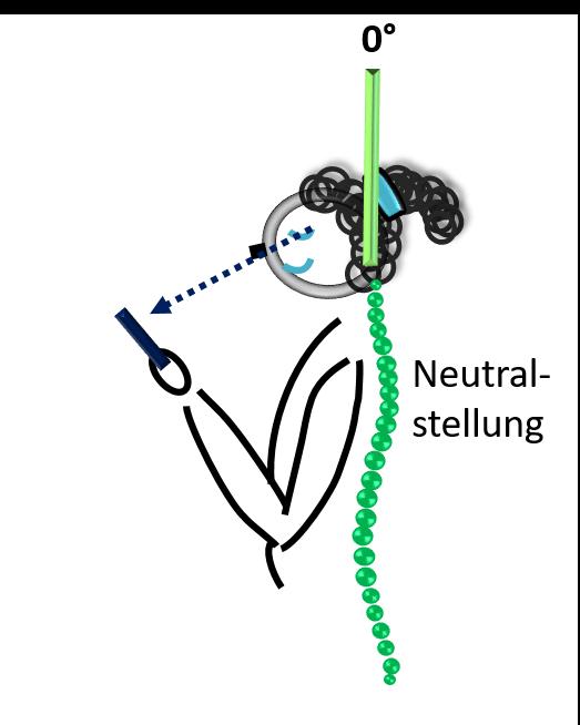 Halswirbelsäule in Neutralstellung